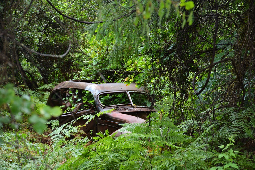car in woods