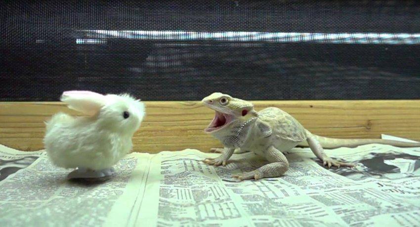 bunny vs dragon