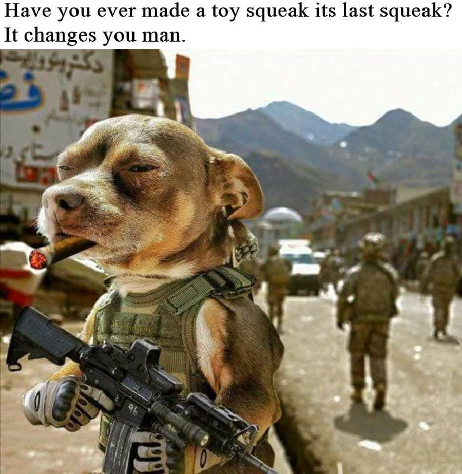 squeak dog