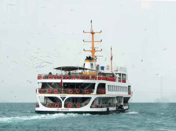 ferry and birds
